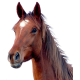 Horse and Pony Products and Accessories