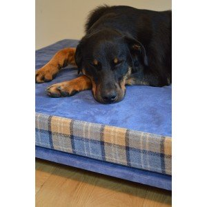 Active Recovery Orthopaedic Dog Bed