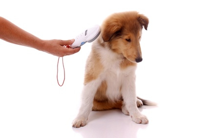 how to find your pet with a microchip
