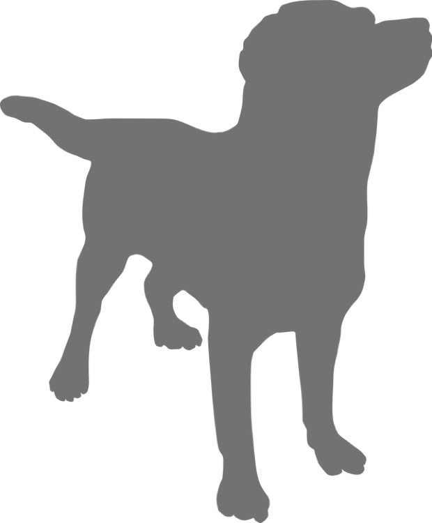 grey dog icon