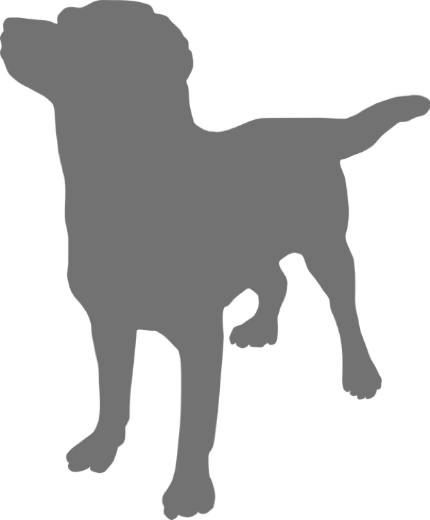 grey lab icon