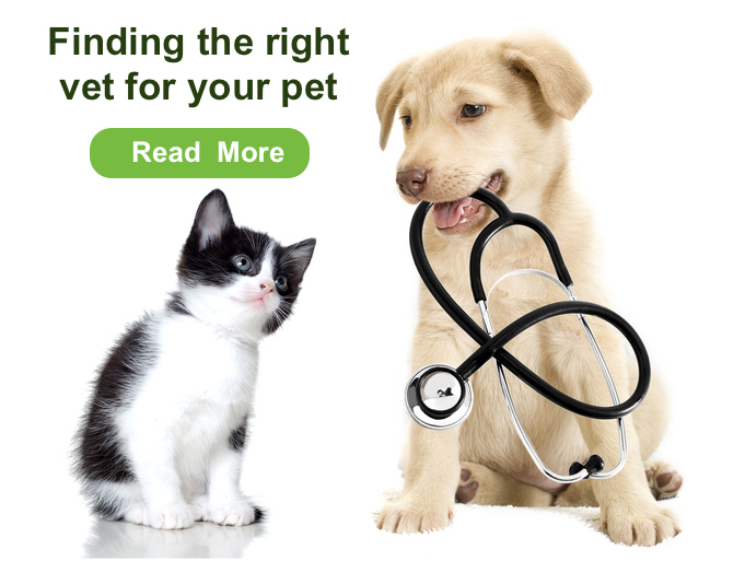 Pet Owner Guide to choosing the right vet for your pet