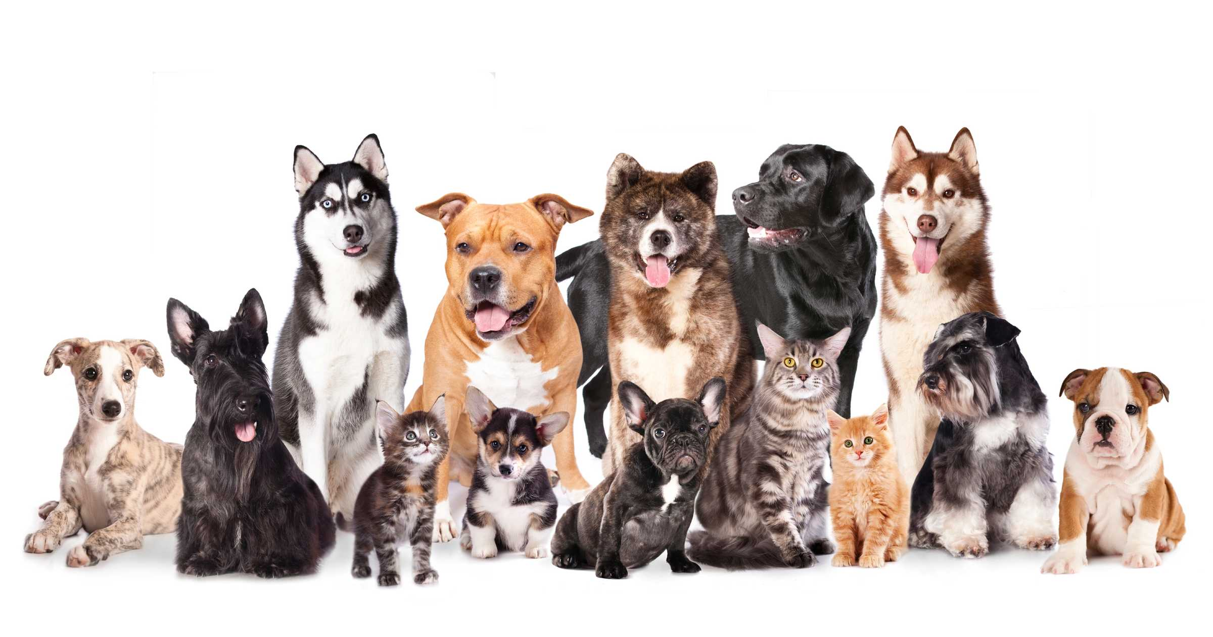 group pic of cats dogs and small pets