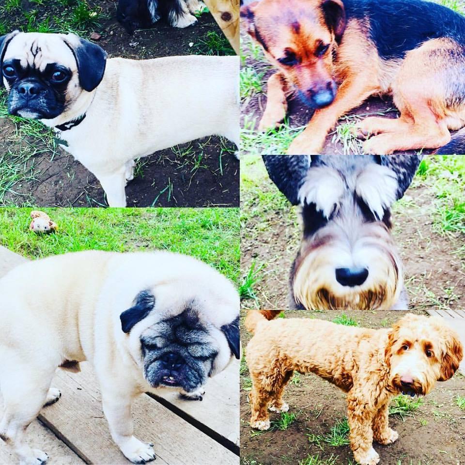 Dog Day Care Brighton And Hove