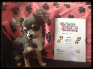 Misty with training certificate 300x224