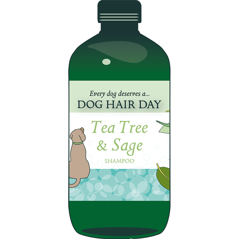 teatree sage bottle drawing 800 square