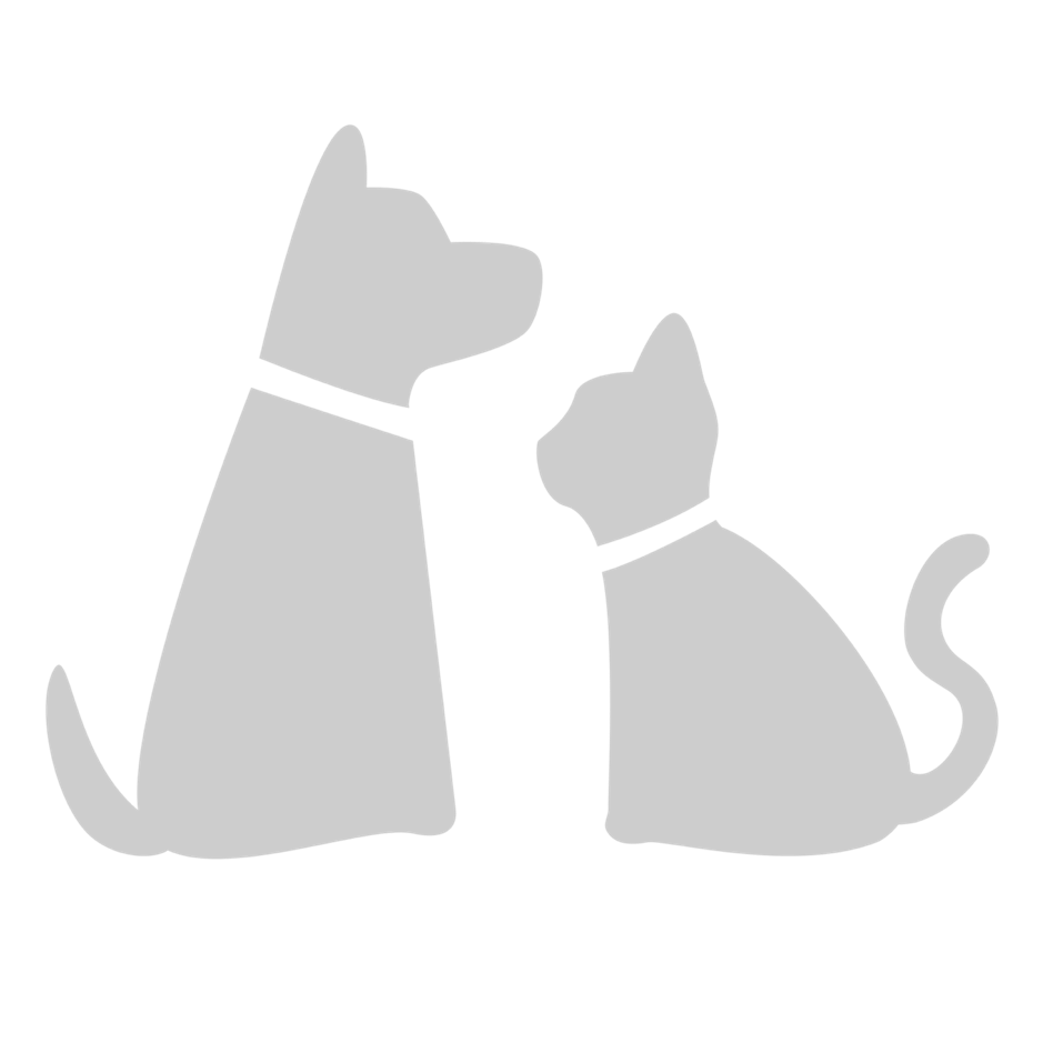 cat and dog trans