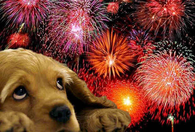 Pets And Fireworks Keeping Your Pet Safe During Fireworks