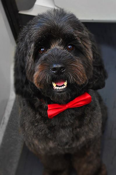 Perfect for dogs that find the traditional dog grooming salon stressful (or the journey there) or for those that just want the VIP (Very Important Pooch) ... & Give a Dog a Comb - Mobile Dog Grooming Salon - Kent
