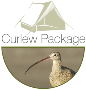 curlew 284x300