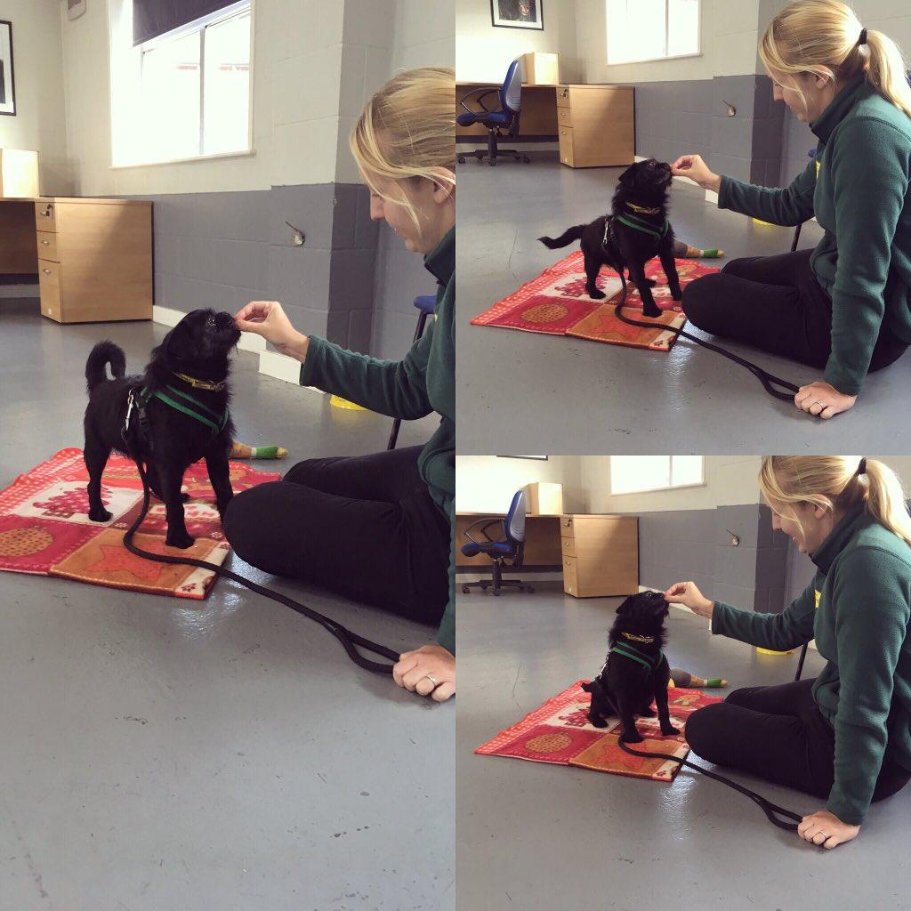 Dogs Trust Training Classes