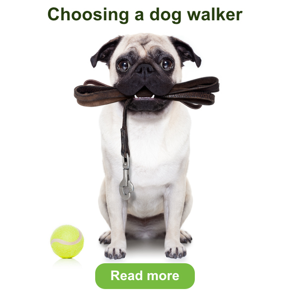 choosing a dog walker