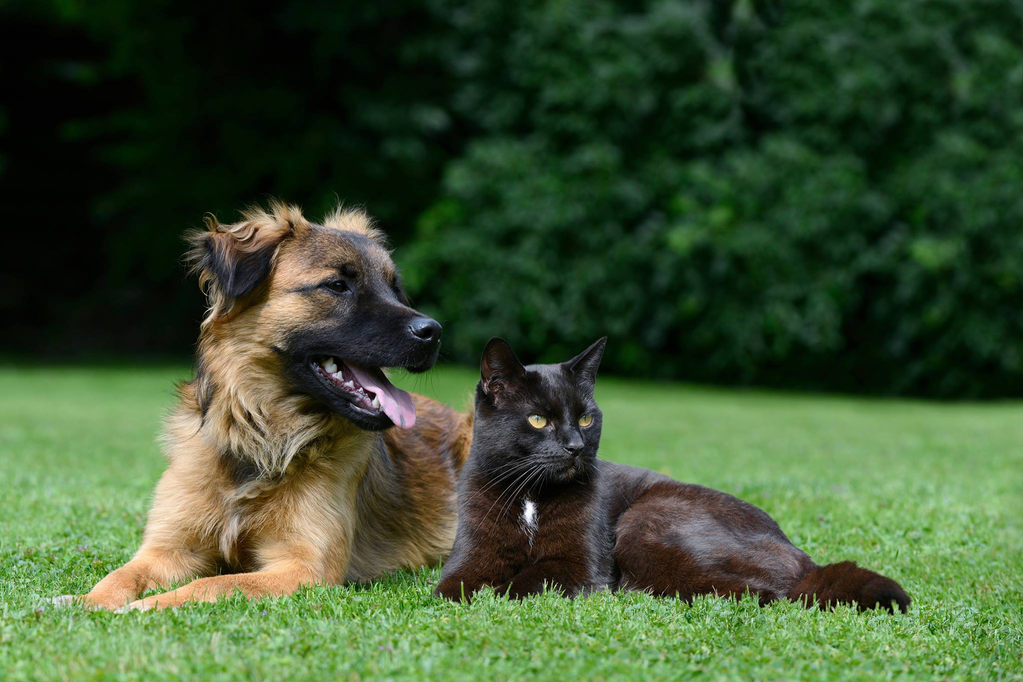 We specialise in    Dog Walking  Group and Solo    Pet Visits   Farm Animal  Visits   Pet Taxi Services Dog Walking  Group    30 minutes    9 per dog   15  Muddy Paws Bath   Dog Walking   Pet Visits   Somerset   Dog  . Dog Walkers Bath Area. Home Design Ideas