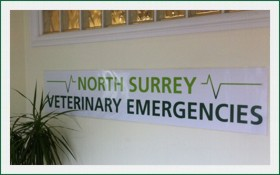 north-surrey-vets-east-molesey-7
