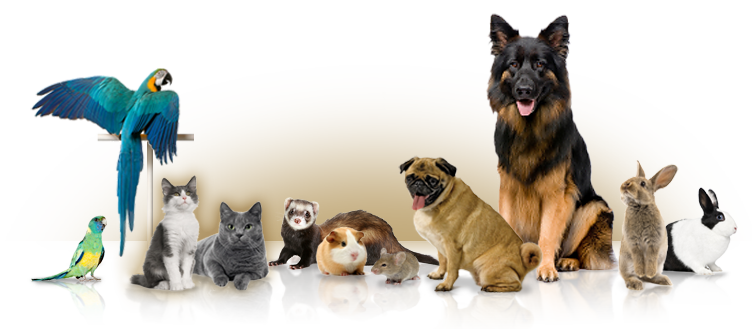 Image result for Online Pet Shop