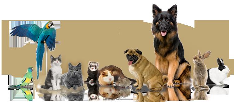 Image result for Online Pet Shop