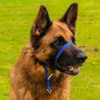 the-gencon-dog-training-lead-collar-without-lead