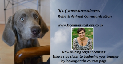 What is Animal Communication, how can it help my pet?