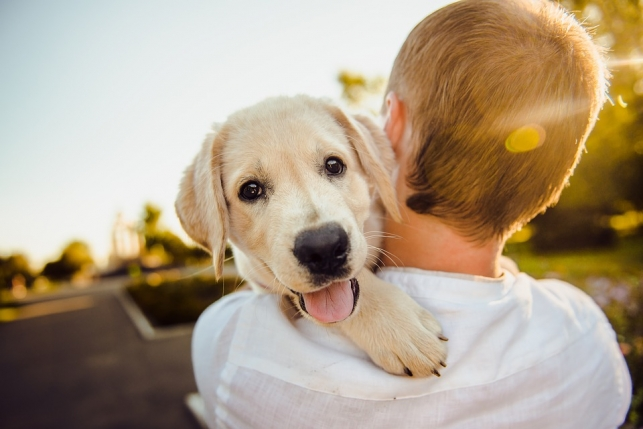 Are you the right person to own a dog?