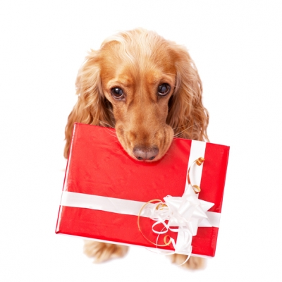 Our Top 10 Pet Products for Christmas 2017
