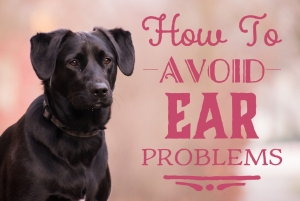 How to avoid ear problems