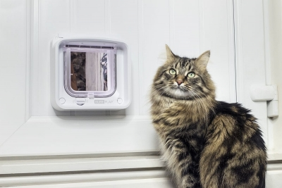 The Most Advanced Cat Flap Ever