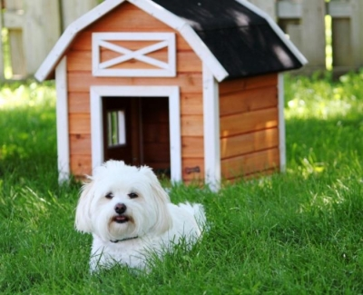 Buying The Right New Home For You & Your Dog - By Cindy Aldridge