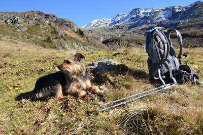 The Do's & Don'ts Of Hiking With Your Dog