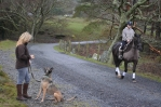 Meeting a horse and rider when out with your dog ... what should I do?