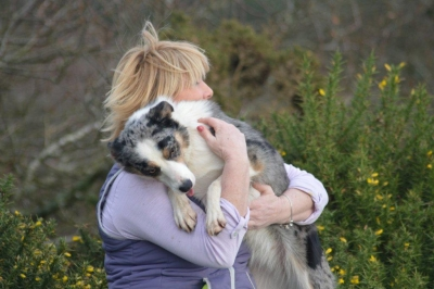 If You Love Your Dog Learn to 'Talk Dog!' - By Sue Williams Bsc. Chairwoman GODT (MT). MCFBA, Expert Dog Training