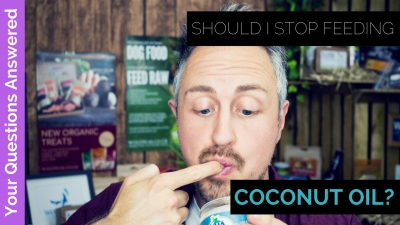 Should you stop feeding your dog coconut oil?