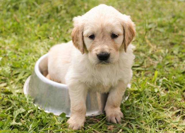 A Complete Guide to Feeding Your Puppy