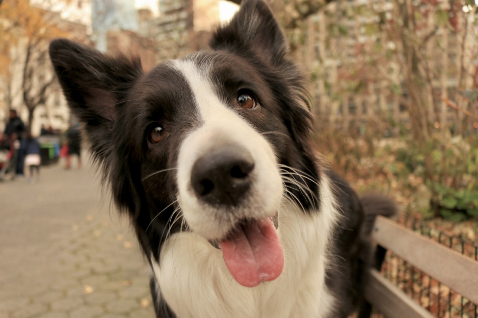 Can Dogs Catch Human Infections