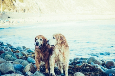 Caring for Your Dog During the Summer Months