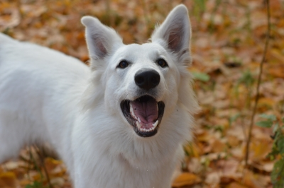 Caring For Your Dogs During The Autumn Months