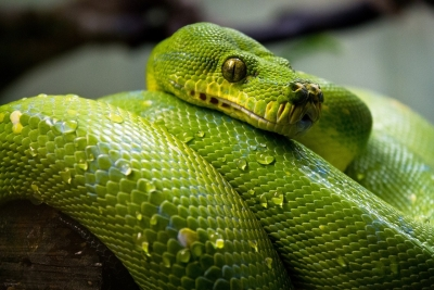 Keeping Exotic Pets - By Catherine Thomas MRCVS