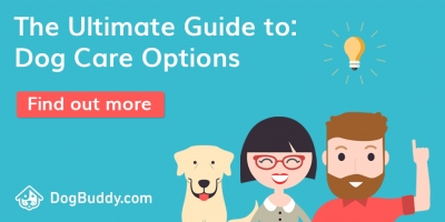Holiday Dog Care Guide