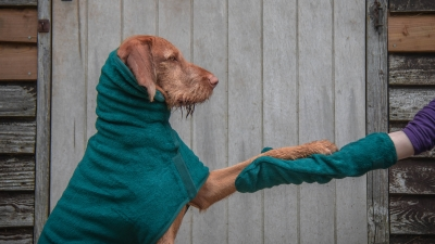 Win a Ruff and Tumble Drying Coat & Drying Mitts