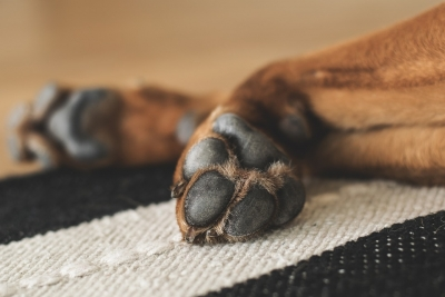 Wipe their feet!  Winter pet advice