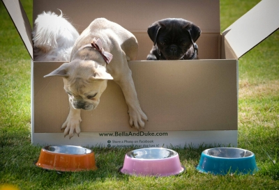 50% OFF Raw Dog Food From Bella and Duke