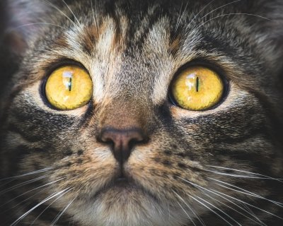 Topical Tapeworm Treatment For Cats
