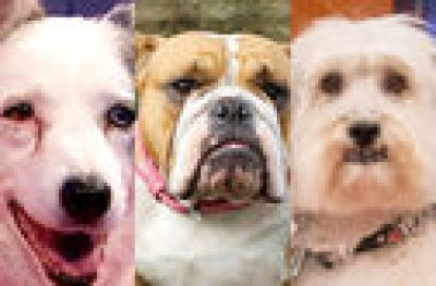 Match the TV Dogs to the shows they star in!
