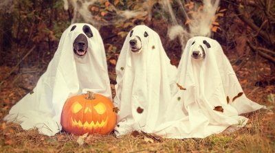 Invite a few paw-pals to a Howl-o-ween Party