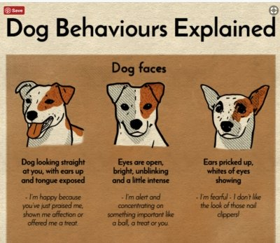 Dog Behaviours Explained infographic