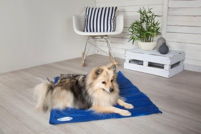 Win A Scruffs® Cool Dog Mat