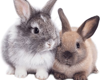 What does a 'Rabbit friendly veterinary practice' mean?