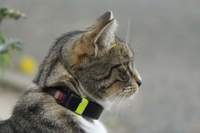 PawTrax - 4th Generation Halo GPS Cat Collar