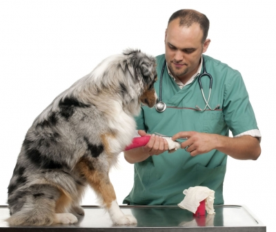 Making a Complaint About Your Vet