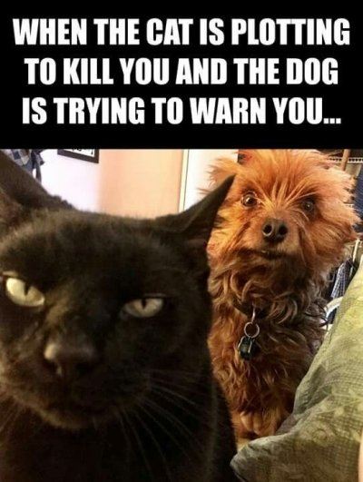 Cats & Dogs - Relationship Status: 'It's complicated'