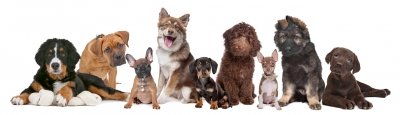 How many of these dog breeds can you name?